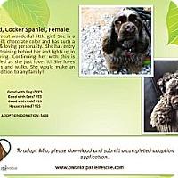 Adopt A Pet :: Mia - Ottawa, ON