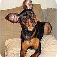 Adopt A Pet :: Niko - Nashville, TN