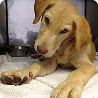 Adopt A Pet :: Doc - Cumming, GA