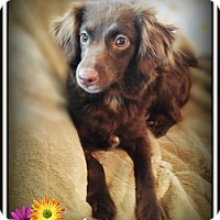 Adopt A Pet :: Lila - Pascagoula, MS