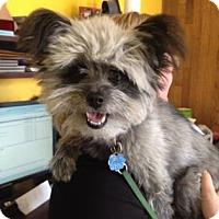 Adopt A Pet :: Lulu - Saskatoon, SK