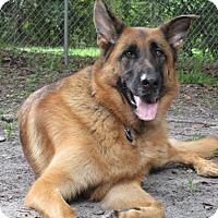 Adopt A Pet :: Aspen - Green Cove Springs, FL