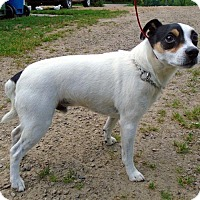 Adopt A Pet :: Joshua - Brant, ON