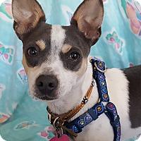 Adopt A Pet :: Remmy - San Francisco, CA