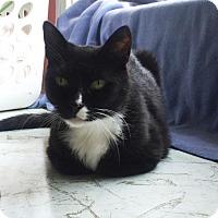 Adopt A Pet :: Tommy - Washington, VA