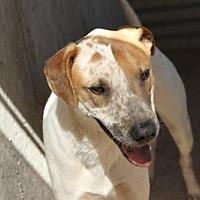 Adopt A Pet :: PJ - Golden Valley, AZ