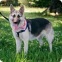 Adopt A Pet :: Annie - Morrisville, NC