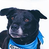 Adopt A Pet :: Gemma - New Castle, PA