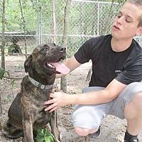Adopt A Pet :: Bruce - Camden, SC