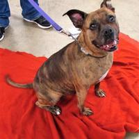 Adopt A Pet :: Sami - Twinsburg, OH