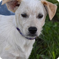 Adopt A Pet :: Punch - Adorable - Texico, IL