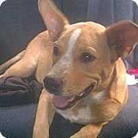 Adopt A Pet :: TANK - Hancock, MI