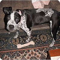 Adopt A Pet :: Jazzi - Fort Hunter, NY