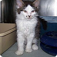 Adopt A Pet :: Bucky - Dover, OH