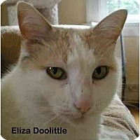 Adopt A Pet :: Eliza Doolittle - Portland, OR