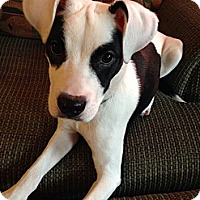 Adopt A Pet :: Zorro - Oak Creek, WI