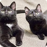Adopt A Pet :: Kari & Kayla - Chicago, IL
