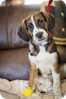 Hound (Unknown Type) Mix Puppy for adoption in Evansville, Indiana - Wayne