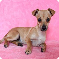 Adopt A Pet :: Lolly - Milan, NY