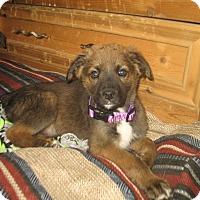 Adopt A Pet :: Sophie - Egremont, AB
