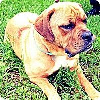 Adopt A Pet :: Hooch - Killeen, TX