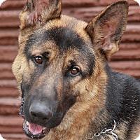 Adopt A Pet :: Skye von Syke - Los Angeles, CA