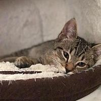 Adopt A Pet :: Bajie - Yorba Linda, CA
