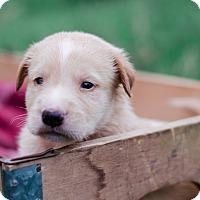Adopt A Pet :: Fez $250 - Seneca, SC