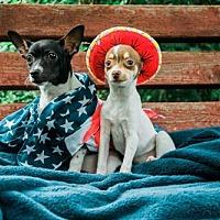 Adopt A Pet :: Taco Pete - Salt Lake City, UT