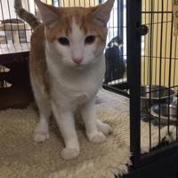 Adopt A Pet :: Morty - Waldorf, MD