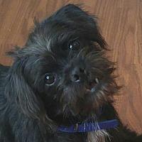 Adopt A Pet :: Moe - Forreston, TX