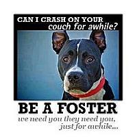 Adopt A Pet :: We need foster home volunteers - Bennington, VT