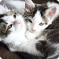 Adopt A Pet :: Timmy & Tommy - Xenia, OH