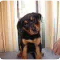 Adopt A Pet :: Emma - Surrey, BC