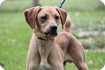 Labrador Retriever Mix Dog for adoption in Midland, Michigan - Dellow