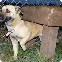 Adopt A Pet :: Pinkie - Terrell, TX