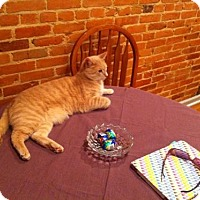 Domestic Shorthair Cat for adoption in Baltimore, Maryland - Bazel -  COURTESY POST