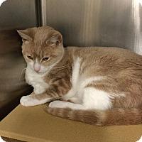 Adopt A Pet :: Candy - Colmar, PA