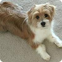 Adopt A Pet :: Milo-ADOPTION PENDING - Boulder, CO