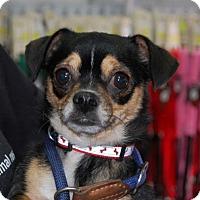 Adopt A Pet :: Cherokia - Brooklyn, NY