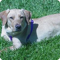 Adopt A Pet :: Baxter 2017 (m/c) - Chesterfield, MI