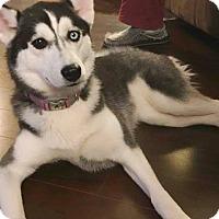 Adopt A Pet :: Aurora - Clearwater, FL