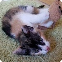 Adopt A Pet :: Aconcagua - North Highlands, CA