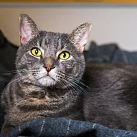 Adopt A Pet :: Dexter - Palm Springs, CA
