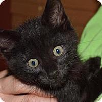 Adopt A Pet :: Darryl - Nashville, IN