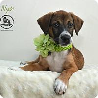Adopt A Pet :: Nyah - Kenner, LA
