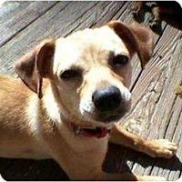 Adopt A Pet :: Jake & Camy (Camy) - Duluth, GA