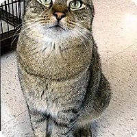 Adopt A Pet :: Sid - Medway, MA