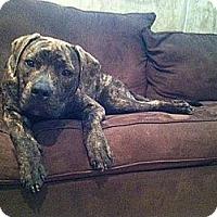 Adopt A Pet :: Remy - WARREN, OH