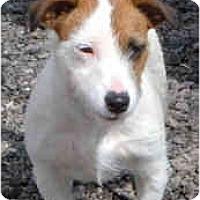 Adopt A Pet :: DANI - Phoenix, AZ